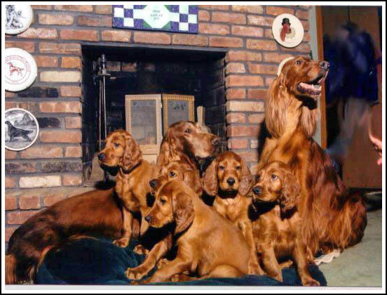 Evergreen Irish Setters (Mary Merlo, USA) Family photograph