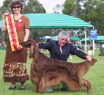 Aust Grand Ch/Am/Can Ch Eireannmada Fortuitous ~ Roddy