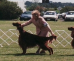 Irish Setter Club of Victoria\'s 1999 Championship Show