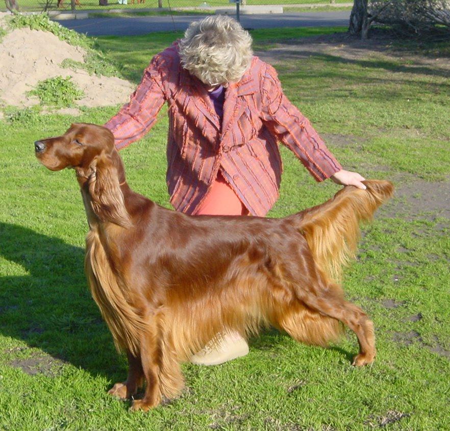 Dog Judges Australia