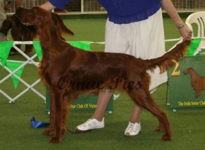 minor dog 1st - Eirean Pure Vagabond 2