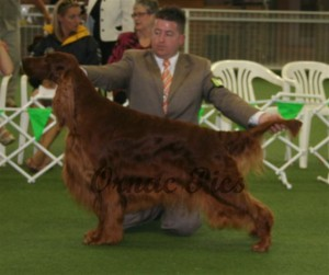 open dog 3rd - Brodruggan Temptation 2