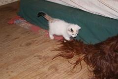 brave kitty 1