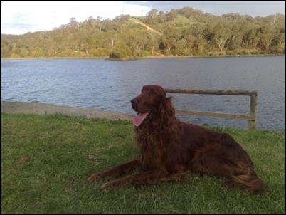 Ryder at the Lake