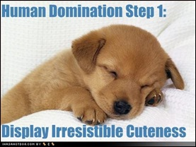 cute-puppy-pictures-puppy-will-dominate-earth