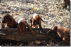 irish puppies (mossxcara) 089