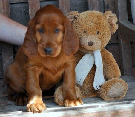 irish puppies (mossxcara) 117