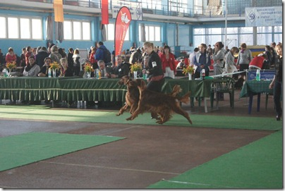 frodo and seela best in show brace