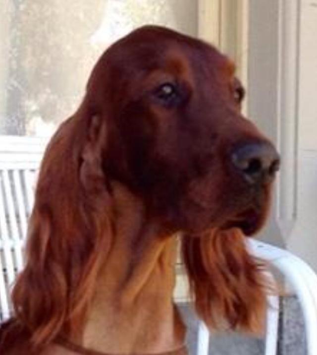 Castlemaine Dog Show