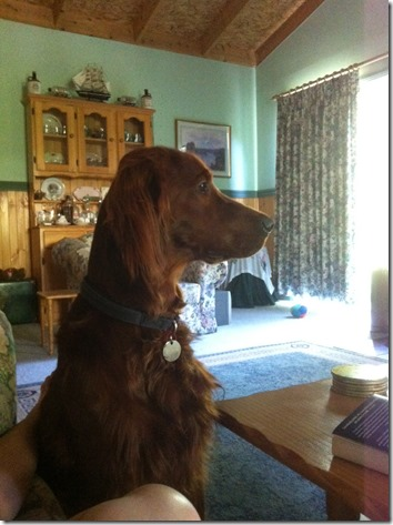 blaze barbour watching tv