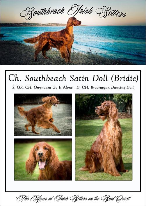 Sullivan dogs 2014-4 -1