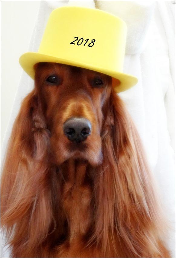 DSC03317.JPGhat.jpg nye hat