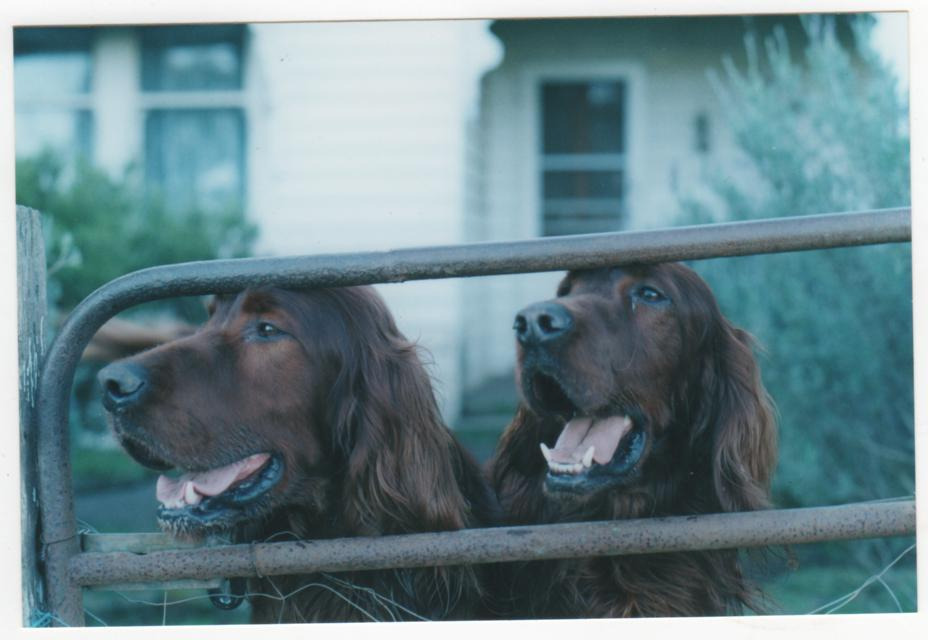 bailey & mitch