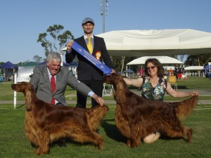 Irish Setter association of NSW 2014 BIS and RUBIS