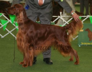 Aust Bred Dog 1st - Eirean Frozen Dream 2