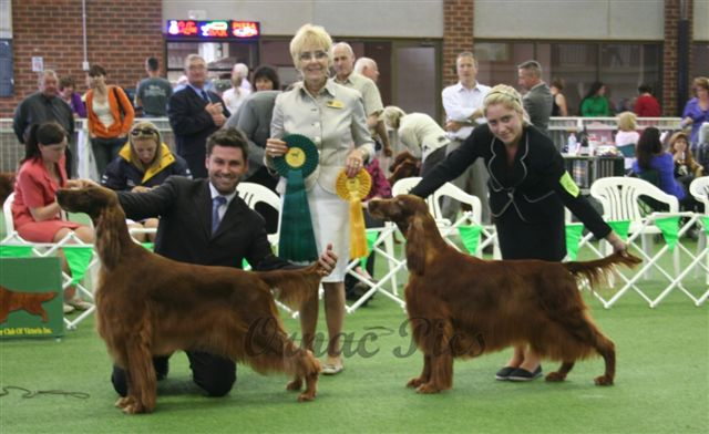 ~ irish show BCC & RES 2009 with judge