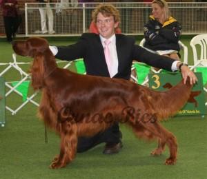 junior dog 1st - Brodruggan Outback Jack 2