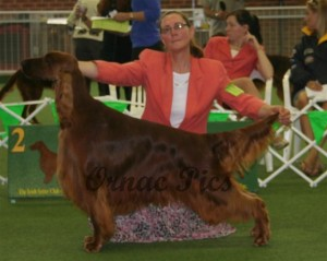 open dog 2nd - cairncross concierge with tullane 2