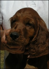 Bogey as a small Pup