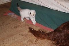 brave kitty 2