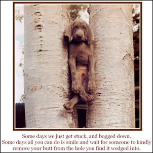 dog-stuck-in-trees-funny-sayings