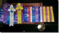 tebows winning ribbons