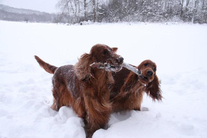 kaisler in snow
